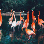 A crowd of flamingos in Barcelona, Image: Msh Foto, Unsplash
