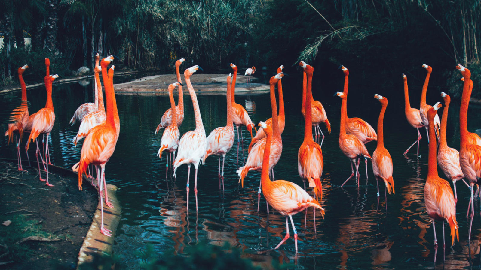 A crowd of flamingos in Barcelona, Image: Msh Foto, Unsplash
